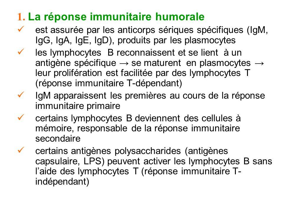 1. La réponse immunitaire humorale