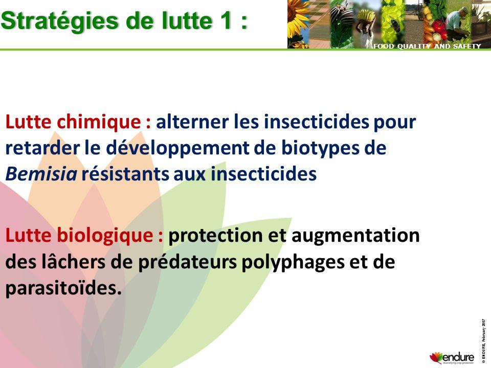 Stratégies de lutte 1 : Lutte chimique : alterner les insecticides pour retarder le développement de biotypes de Bemisia résistants aux insecticides.