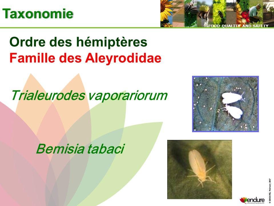 Taxonomie Ordre des hémiptères Famille des Aleyrodidae