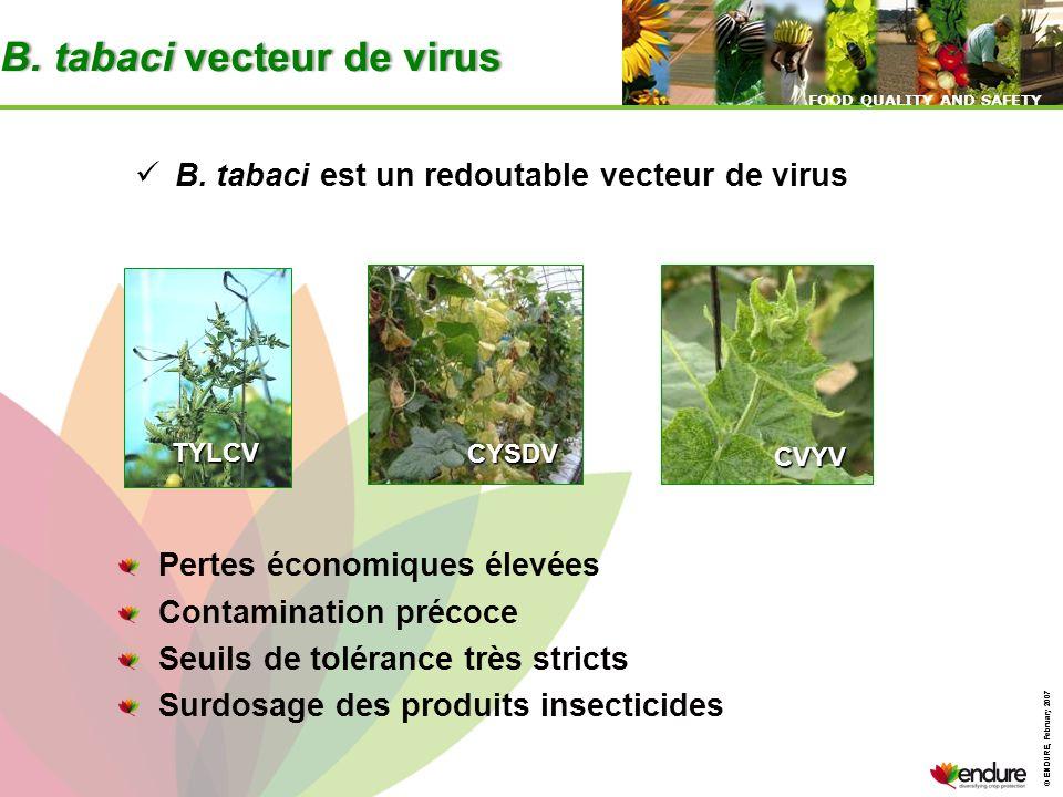 B. tabaci vecteur de virus