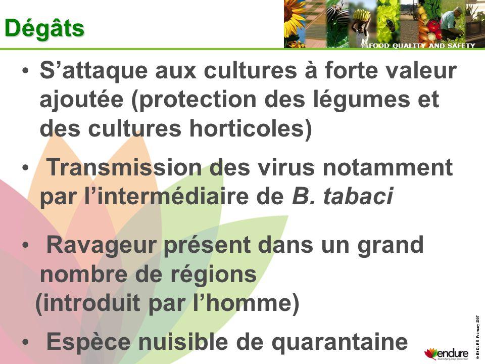 Transmission des virus notamment par l'intermédiaire de B. tabaci