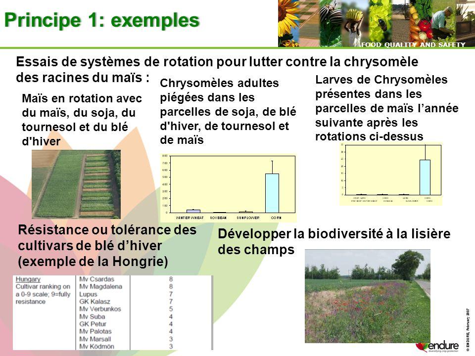 Principe 1: exemples Essais de systèmes de rotation pour lutter contre la chrysomèle des racines du maïs :