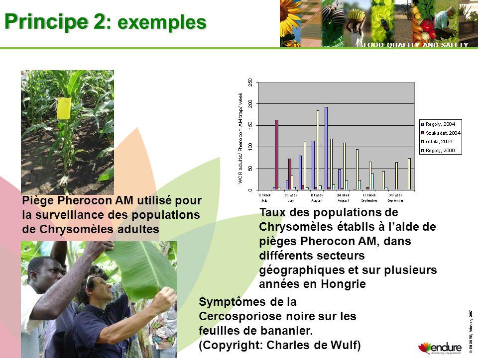 Principe 2: exemples Piège Pherocon AM utilisé pour la surveillance des populations de Chrysomèles adultes.