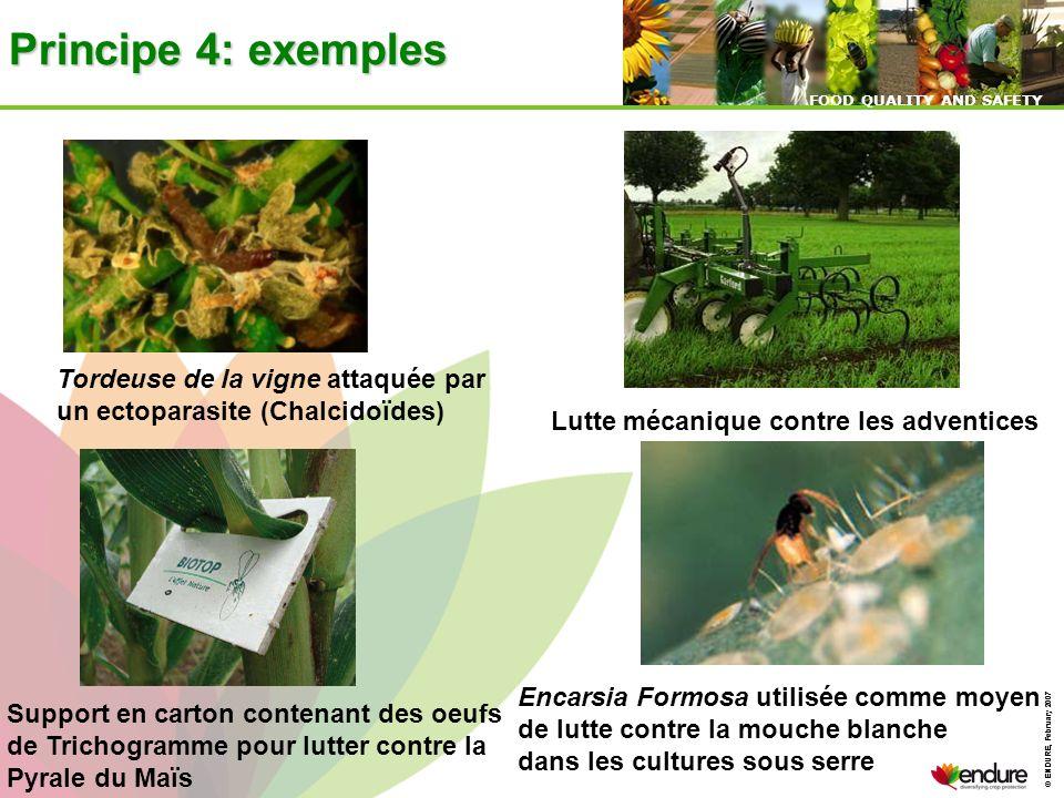 Principe 4: exemples Tordeuse de la vigne attaquée par