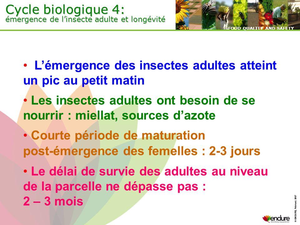 Cycle biologique 4: émergence de l'insecte adulte et longévité
