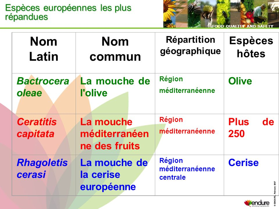 Nom Latin commun Espèces hôtes Bactrocera oleae La mouche de l olive