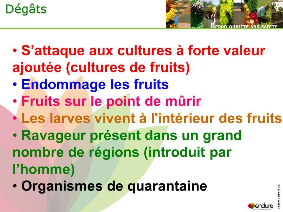 S'attaque aux cultures à forte valeur ajoutée (cultures de fruits)