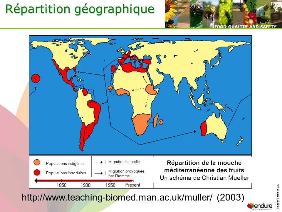 Répartition de la mouche méditerranéenne des fruits