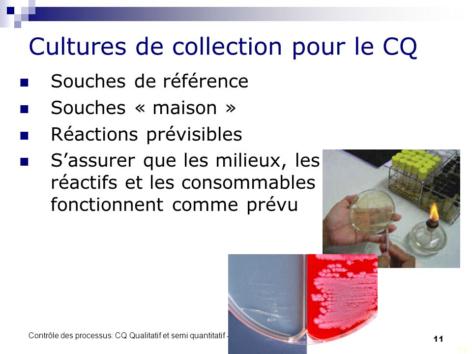 Cultures de collection pour le CQ