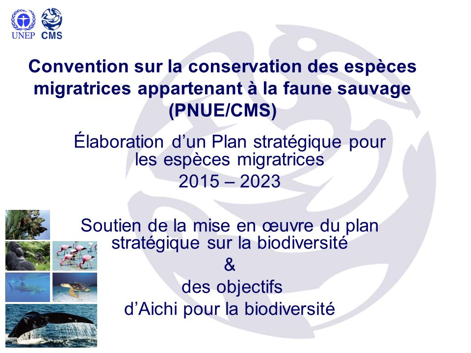 Élaboration d'un Plan stratégique pour les espèces migratrices
