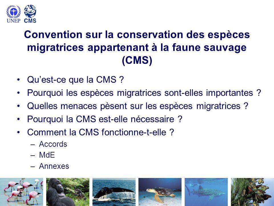 Convention sur la conservation des espèces migratrices appartenant à la faune sauvage (CMS)