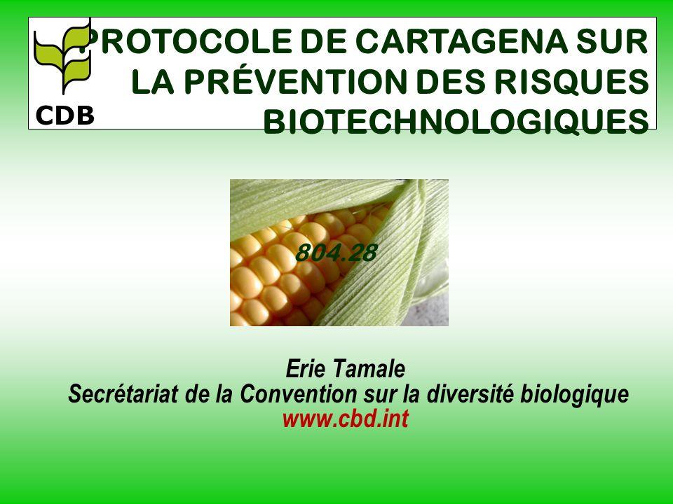Erie Tamale Secrétariat de la Convention sur la diversité biologique