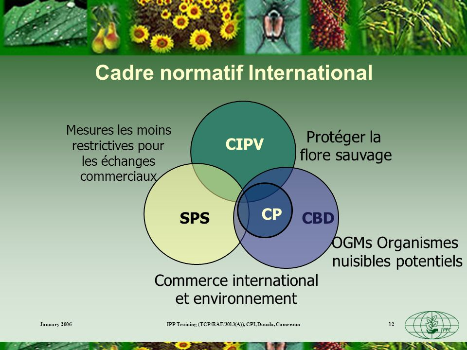 Cadre normatif International