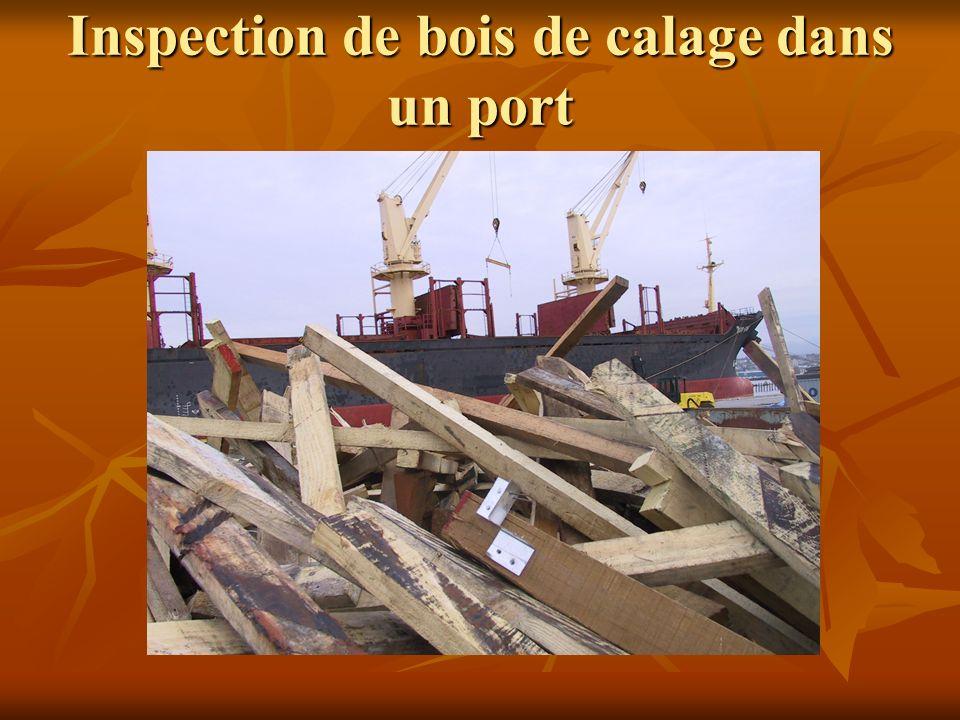 Inspection de bois de calage dans un port