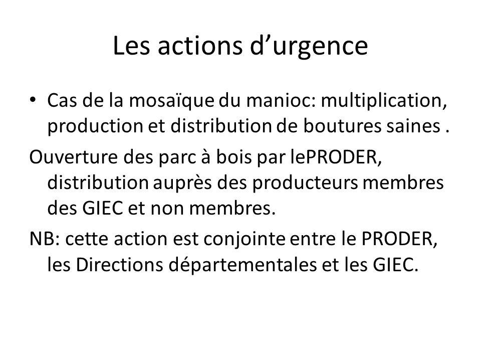 Les actions d'urgenceCas de la mosaïque du manioc: multiplication, production et distribution de boutures saines .