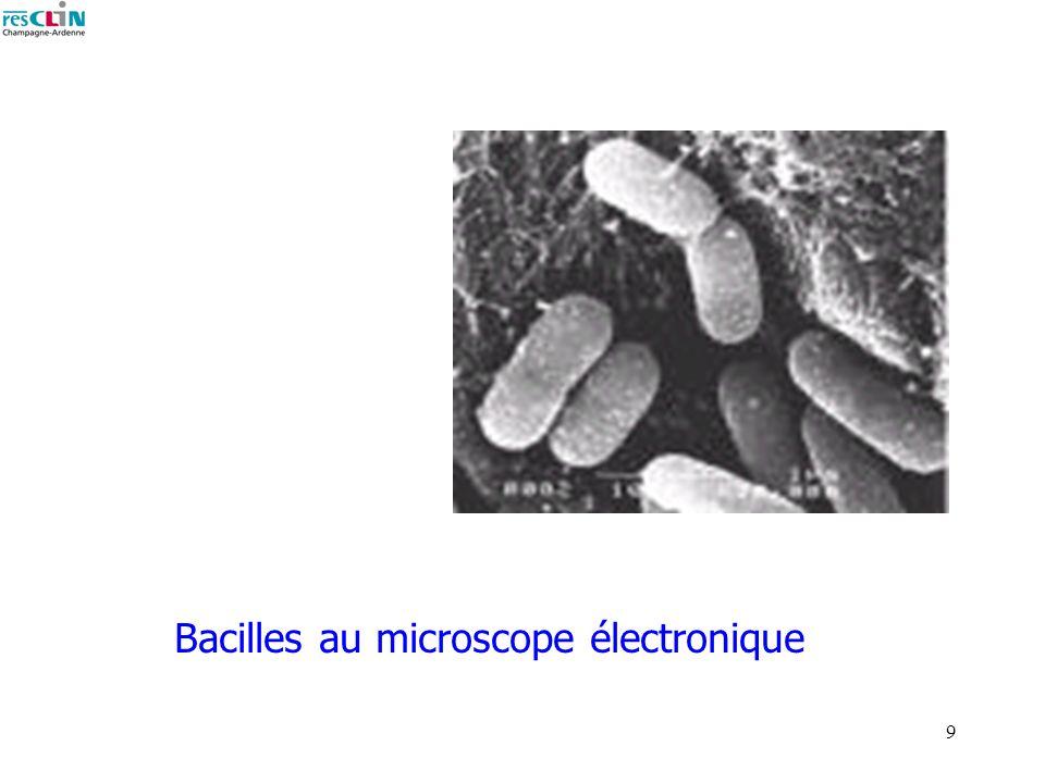 Bacilles au microscope électronique