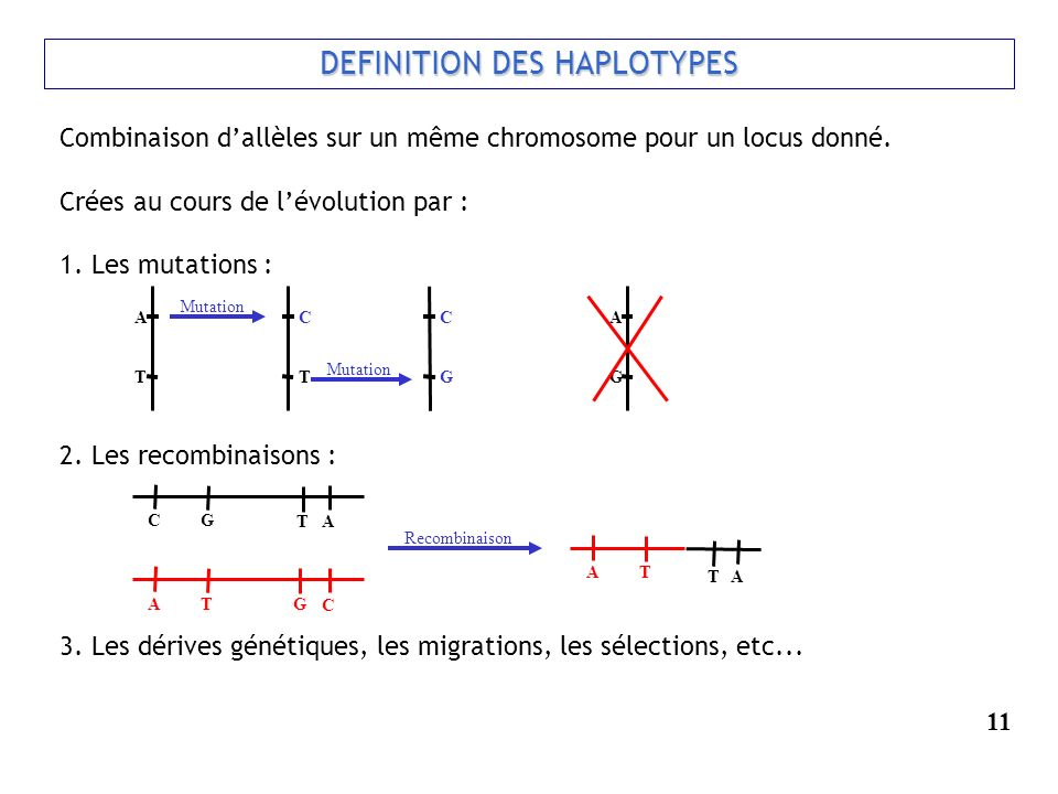 DEFINITION DES HAPLOTYPES