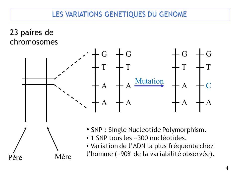 LES VARIATIONS GENETIQUES DU GENOME