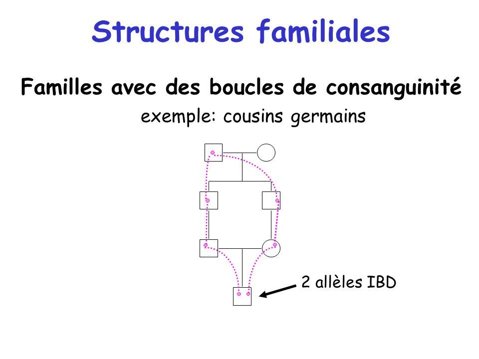 Structures familiales Familles avec des boucles de consanguinité