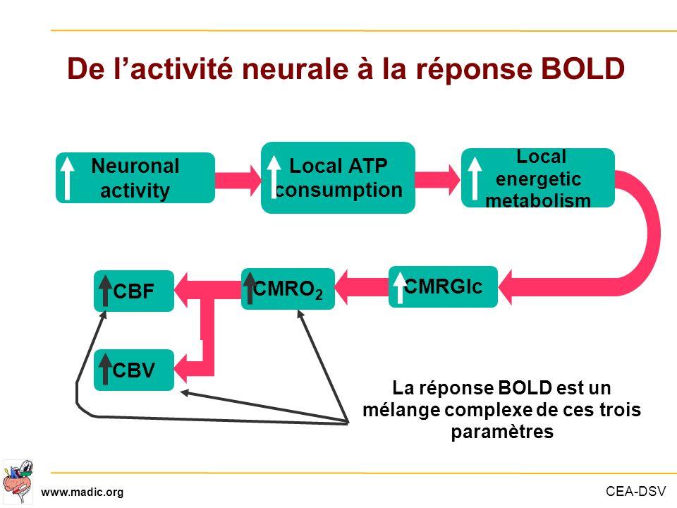 De l'activité neurale à la réponse BOLD