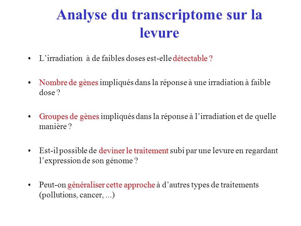 Analyse du transcriptome sur la levure