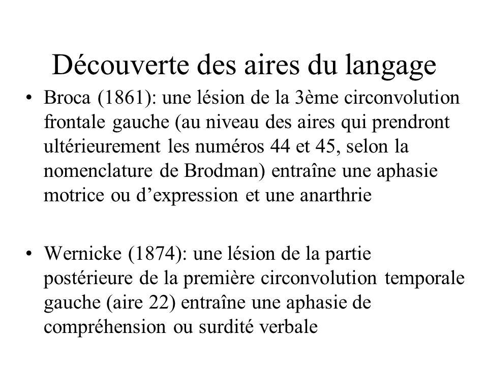 Découverte des aires du langage