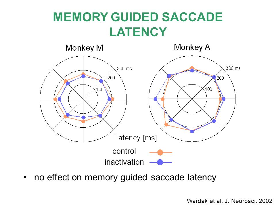 MEMORY GUIDED SACCADE LATENCY