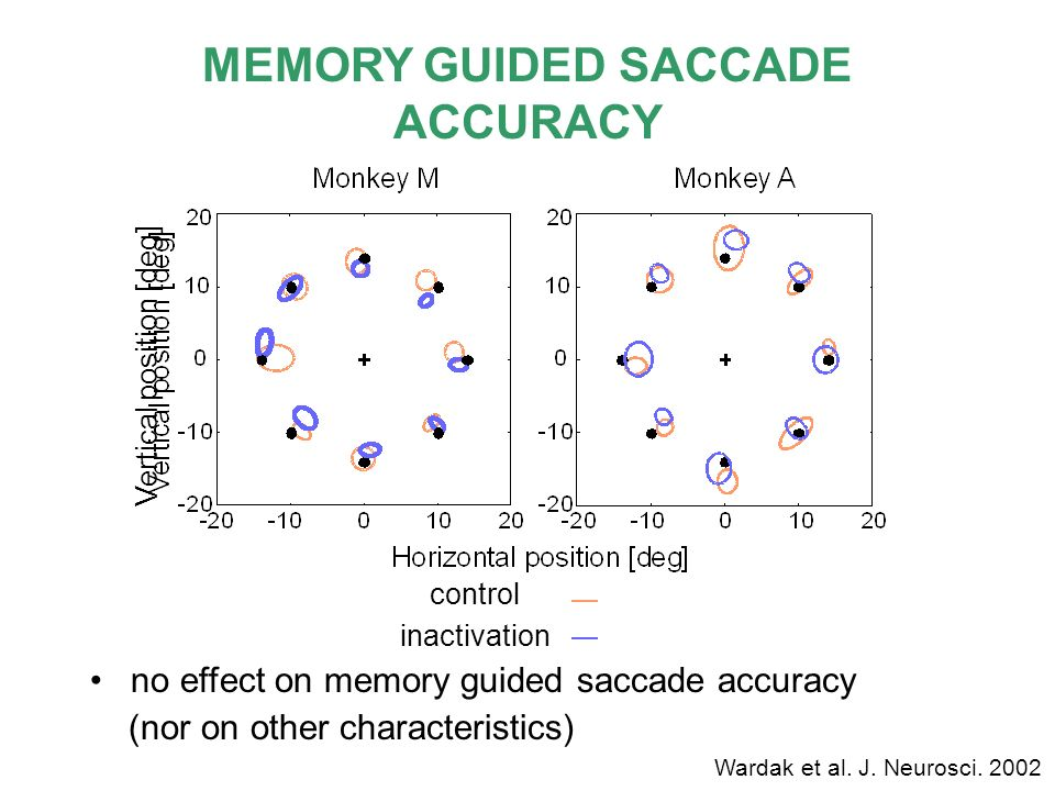 MEMORY GUIDED SACCADE ACCURACY