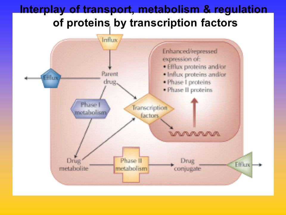 Interplay of transport, metabolism & regulation