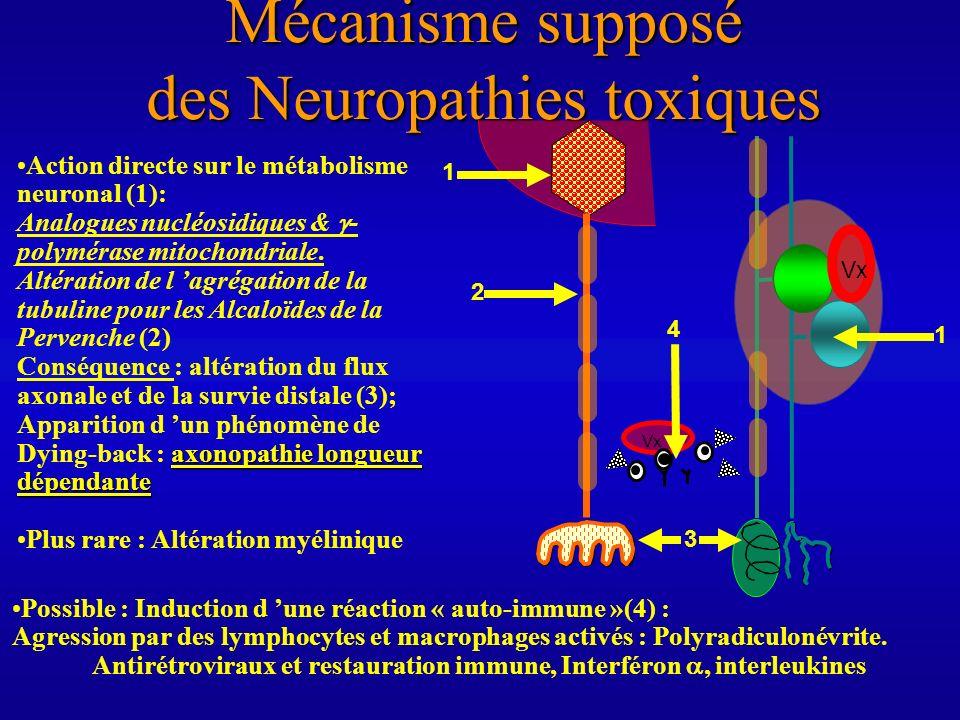 Mécanisme supposé des Neuropathies toxiques