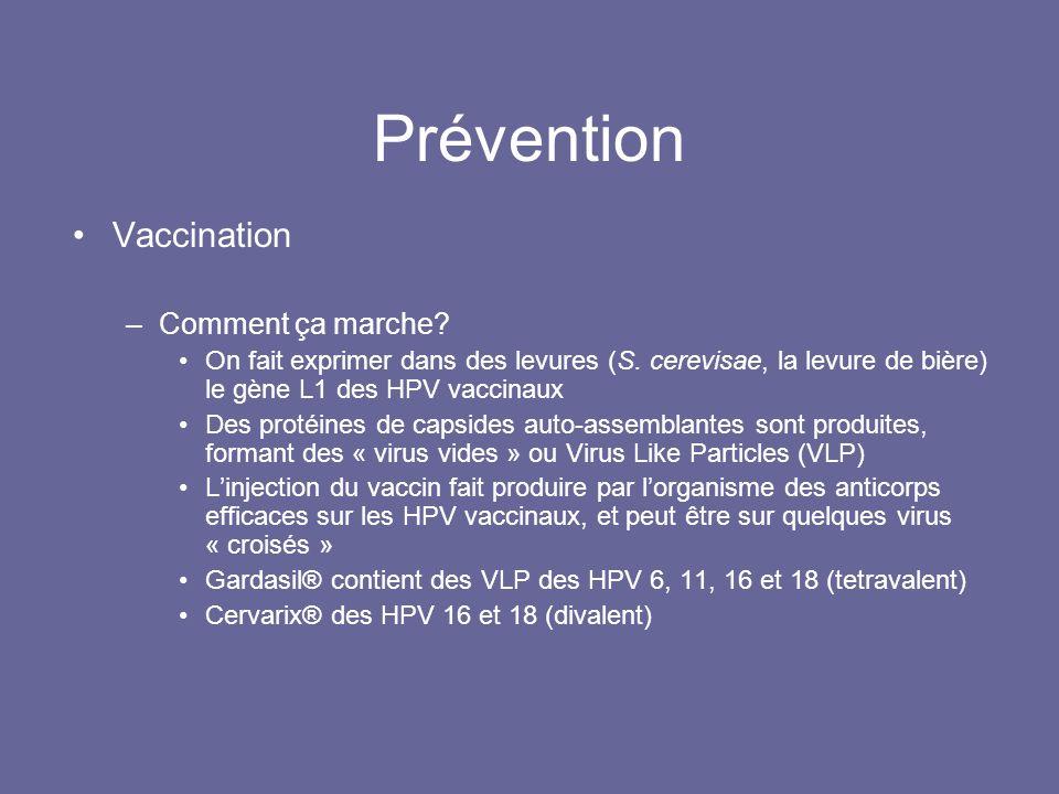 Prévention Vaccination Comment ça marche