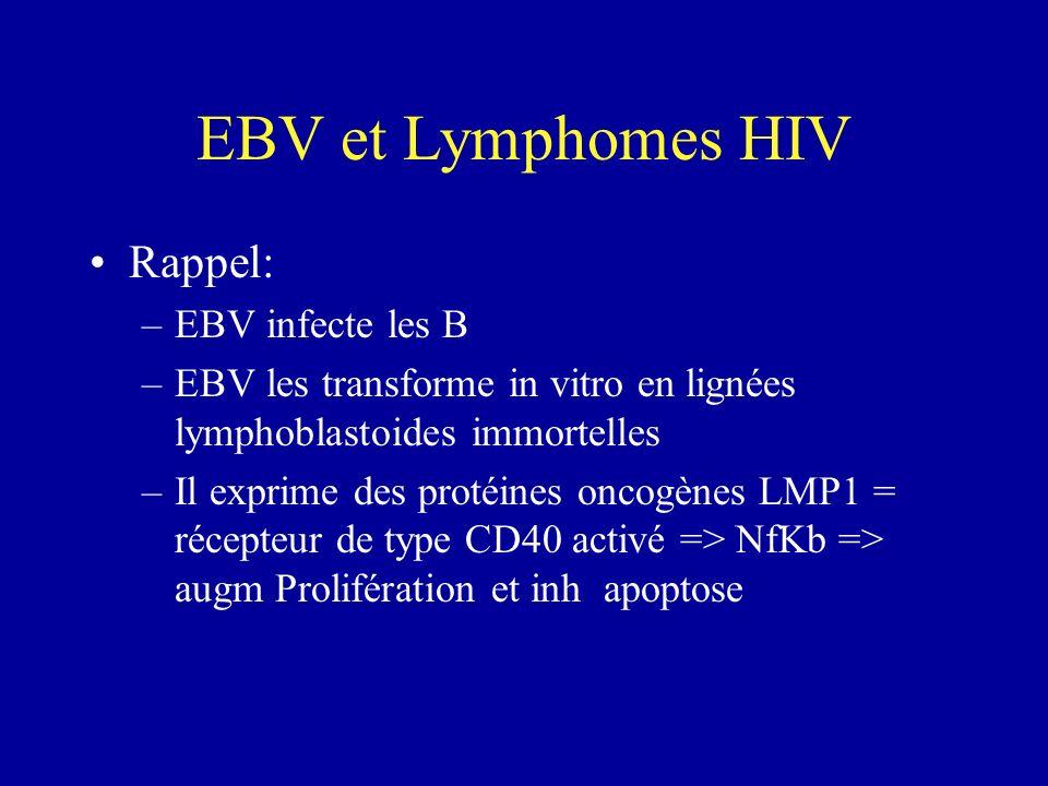 EBV et Lymphomes HIV Rappel: EBV infecte les B