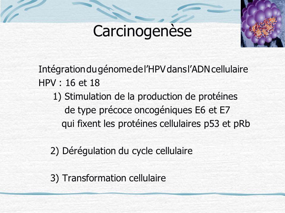 Carcinogenèse Intégration du génome de l'HPV dans l'ADN cellulaire