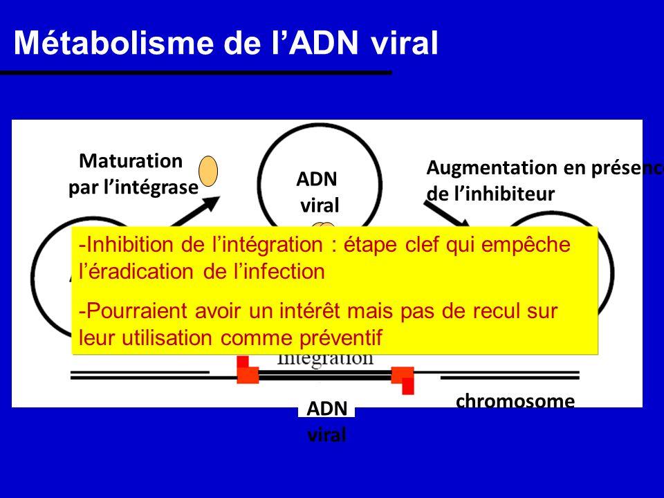 Métabolisme de l'ADN viral
