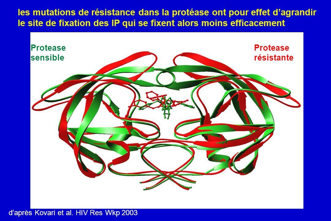 les mutations de résistance dans la protéase ont pour effet d'agrandir le site de fixation des IP qui se fixent alors moins efficacement