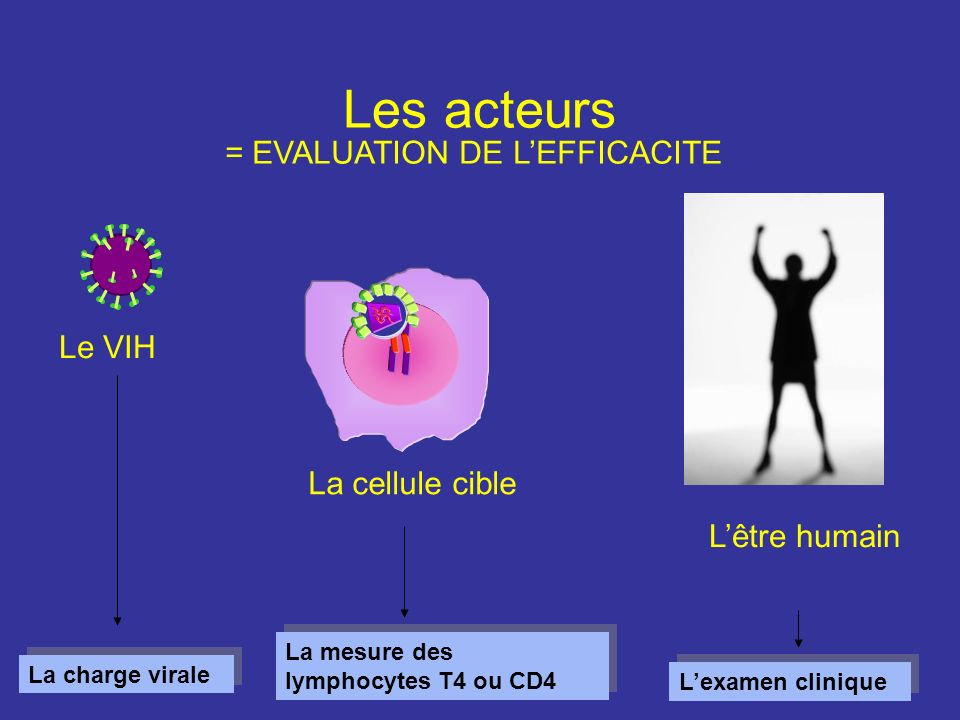 Les acteurs = EVALUATION DE L'EFFICACITE Le VIH La cellule cible