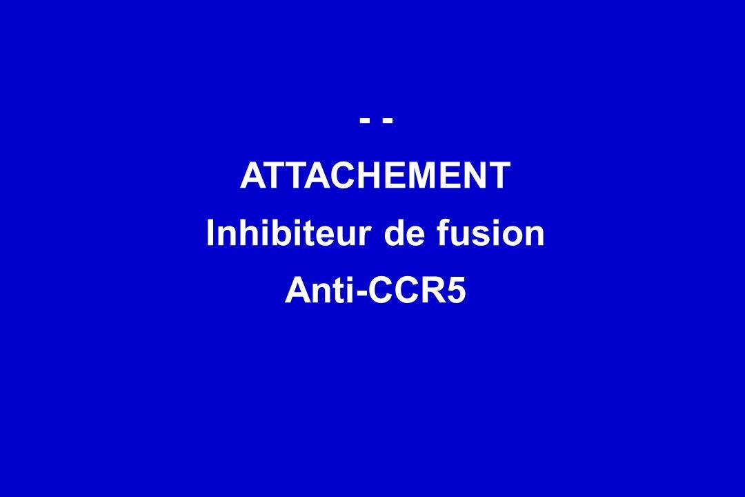 - - ATTACHEMENT Inhibiteur de fusion Anti-CCR5