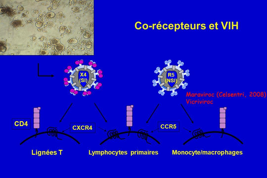 Co-récepteurs et VIH CD4 Lignées T Lymphocytes primaires