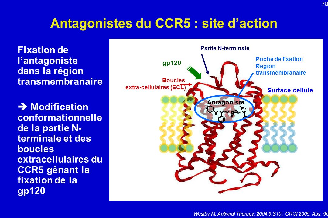Antagonistes du CCR5 : site d'action