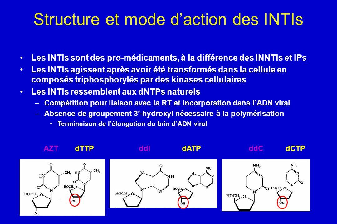 Structure et mode d'action des INTIs