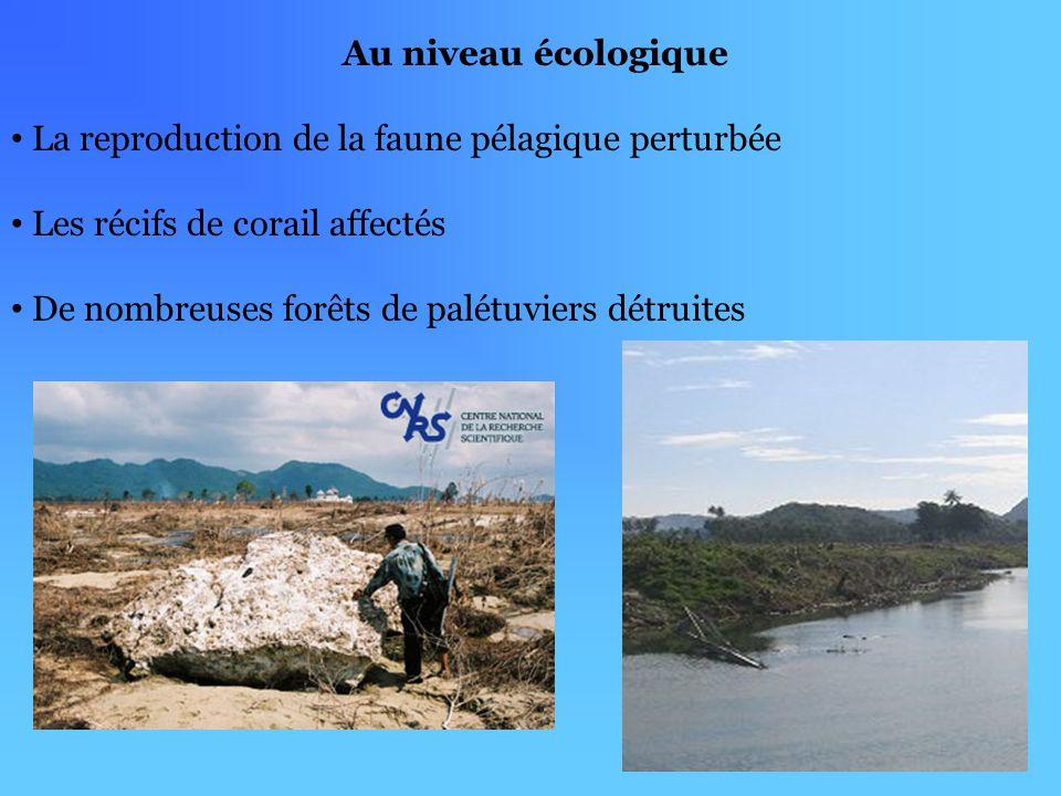 Au niveau écologique La reproduction de la faune pélagique perturbée. Les récifs de corail affectés.