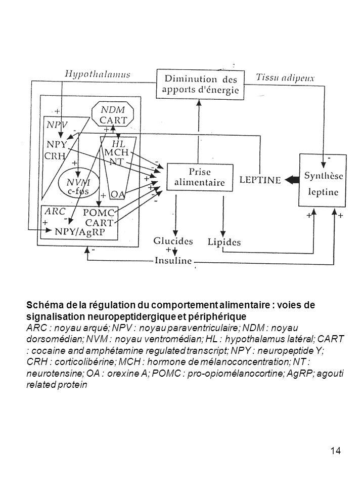 Schéma de la régulation du comportement alimentaire : voies de signalisation neuropeptidergique et périphérique