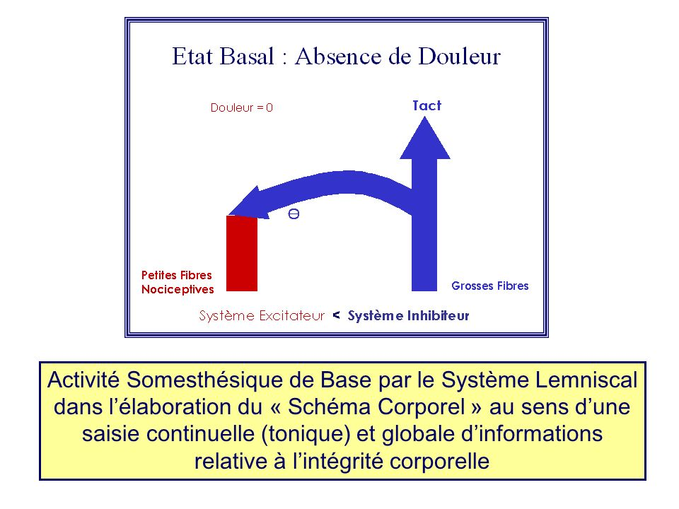 Activité Somesthésique de Base par le Système Lemniscal dans l'élaboration du « Schéma Corporel » au sens d'une saisie continuelle (tonique) et globale d'informations relative à l'intégrité corporelle