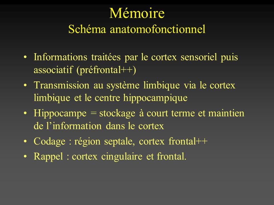Mémoire Schéma anatomofonctionnel