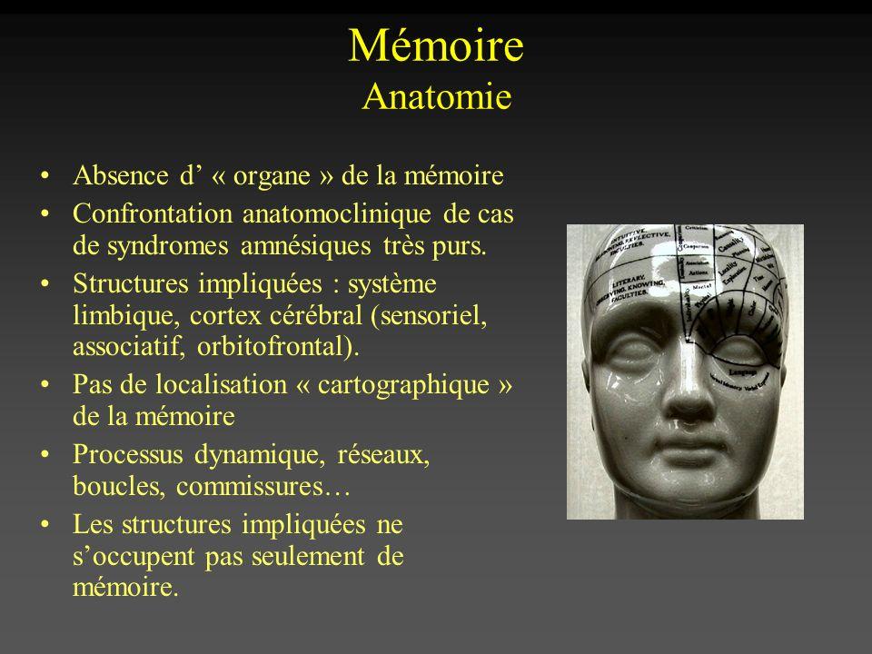 Mémoire Anatomie Absence d' « organe » de la mémoire