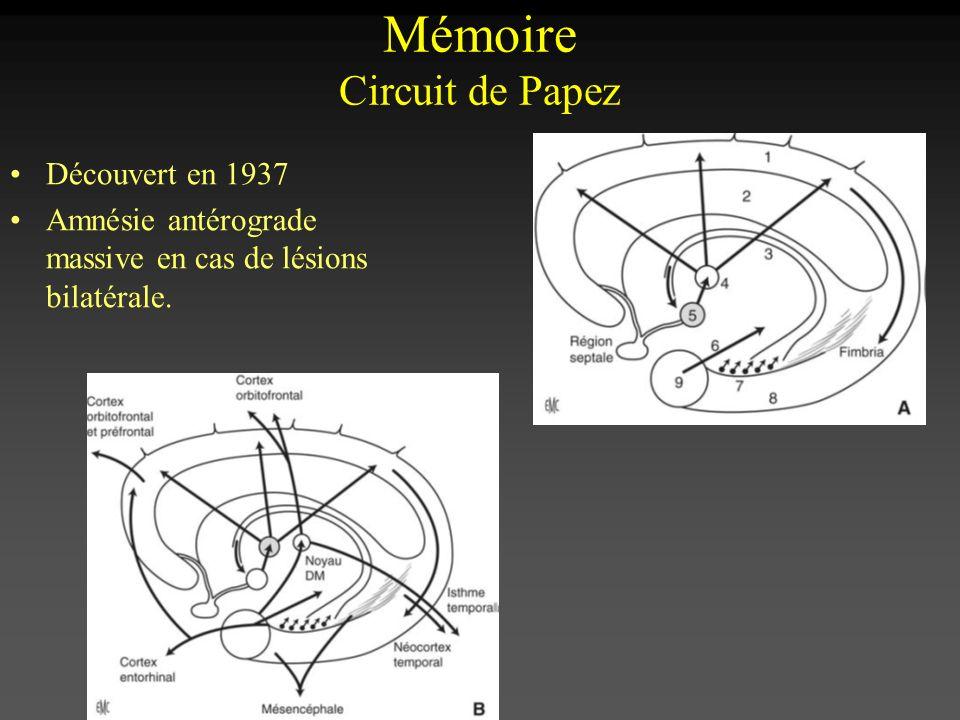 Mémoire Circuit de Papez
