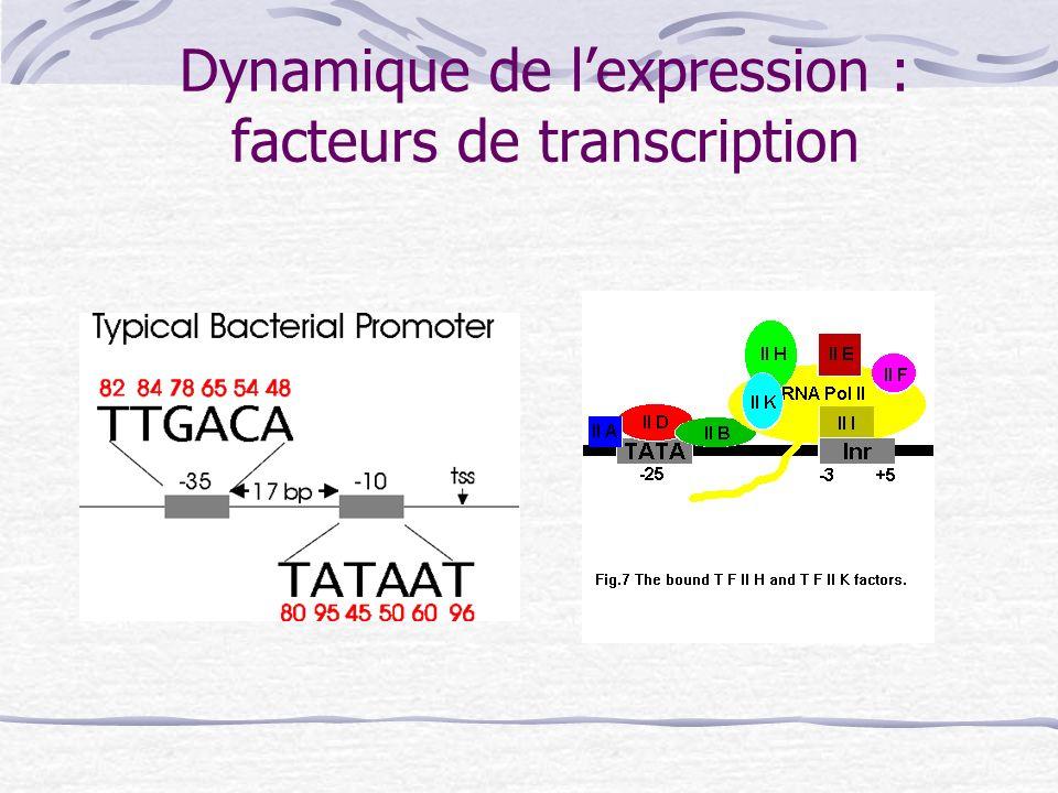 Dynamique de l'expression : facteurs de transcription