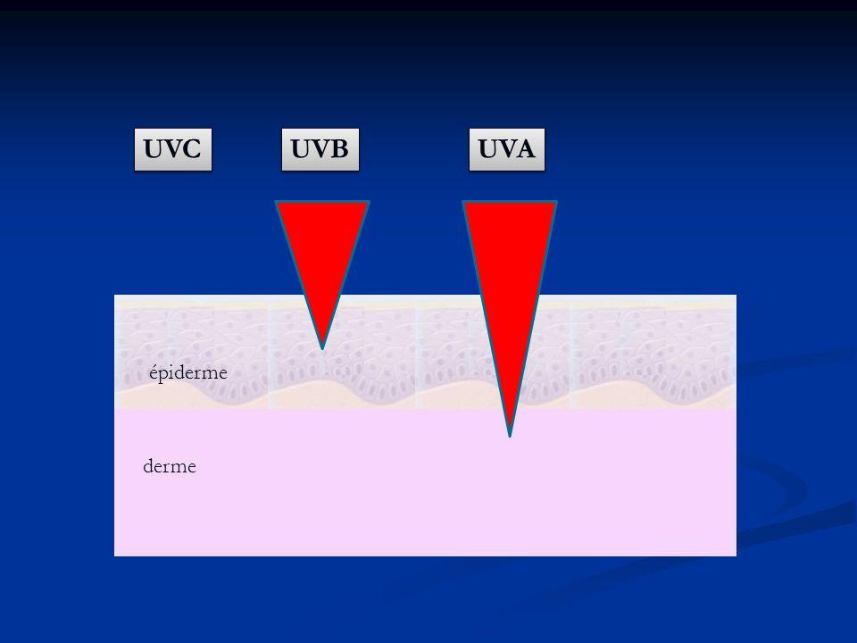 UVC UVB UVA épiderme derme