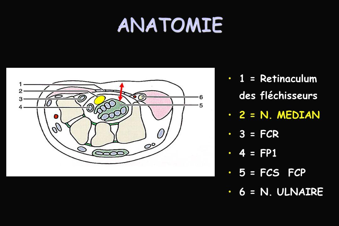 ANATOMIE 1 = Retinaculum des fléchisseurs 2 = N. MEDIAN 3 = FCR