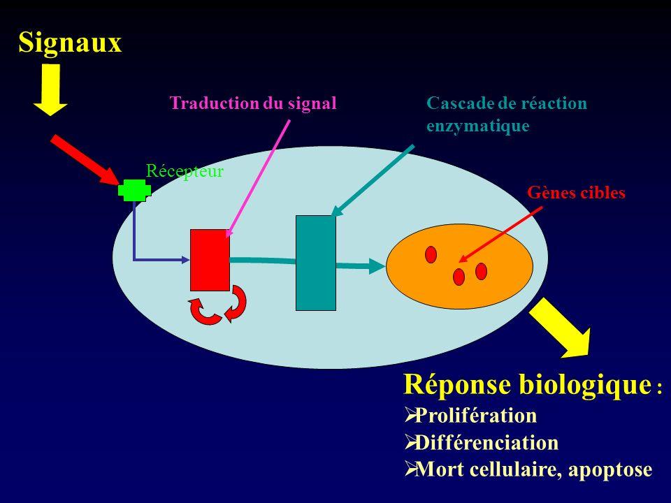 Signaux Réponse biologique : Prolifération Différenciation
